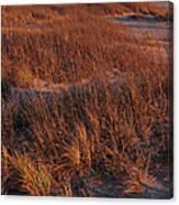 Winter Dunes Iv Canvas Print