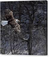 Winter Eagle Flight Canvas Print