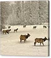 Winter Elk Canvas Print