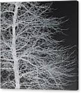 Winter Etching Canvas Print