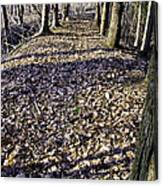 Winter Fall On The Trail Canvas Print