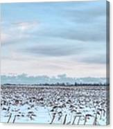 Winter Farm Field Canvas Print