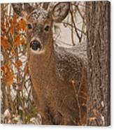 Winter Fawn Canvas Print