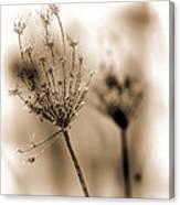Winter Flowers II Canvas Print