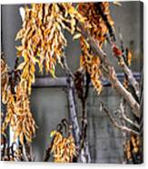 Winter Foliage Old House 13126 Canvas Print