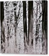 Winter Forest 1 Canvas Print
