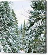 Winter Forest Landscape Canvas Print