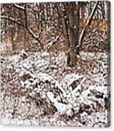 Winter Forest Panorama Canvas Print