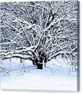 Winter Fresh Canvas Print