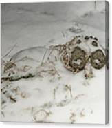 Winter Garden Guardian Canvas Print