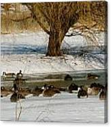 Winter Geese - 01 Canvas Print