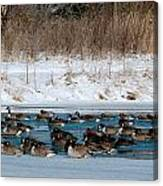 Winter Geese - 02 Canvas Print