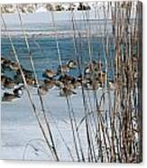 Winter Geese - 04 Canvas Print