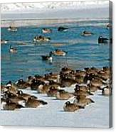Winter Geese - 05 Canvas Print