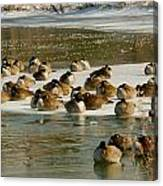 Winter Geese - 06 Canvas Print