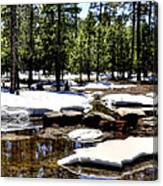 Winter Gives Way To Spring 32626 Canvas Print