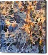 Winter Glory Canvas Print