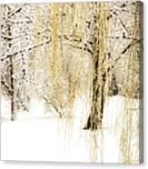 Winter Gold Canvas Print