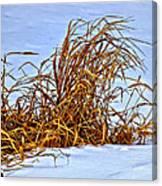 Winter Grasses II Canvas Print