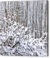 Winter Haven 2 Canvas Print