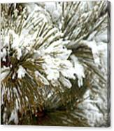 Winter In The Heartland 10 Canvas Print
