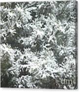 Winter In The Heartland 2 Canvas Print