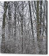 Winter In The Heartland 8 Canvas Print