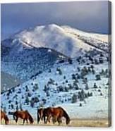Winter In The High Desert  Canvas Print