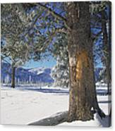 Winter In Yellowstone National Park Canvas Print