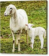 Winter Lamb And Ewe Canvas Print
