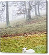Winter Lamb Foggy Day Canvas Print