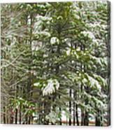 Winter Landscapes Canvas Print
