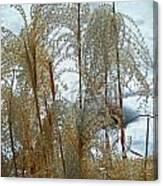 Winter Lasting Canvas Print