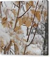 Winter Leaves Canvas Print