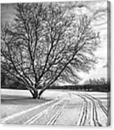 Winter Lines Canvas Print