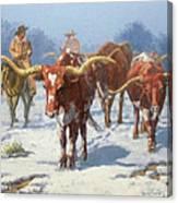 Winter Longhorns Canvas Print