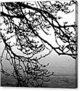 Winter Magnolia Canvas Print