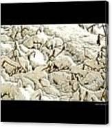 Winter Marigolds Canvas Print