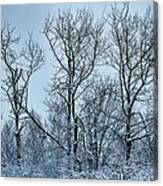 Winter Morning View Canvas Print