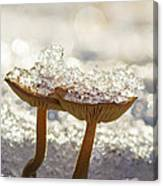 Winter Mushrooms Canvas Print