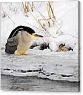 Winter Night Heron Canvas Print