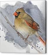 Winter Northern Cardinal Canvas Print