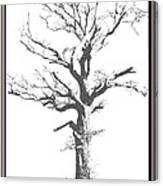 Winter Oak Art Canvas Print