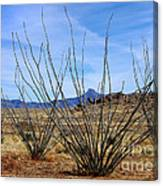 Winter Ocotillo Garden Canvas Print