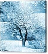 Winter Orchard Canvas Print