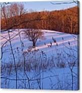 Winter Pasture Sunset Canvas Print