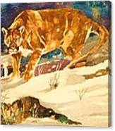 Cougar On The Prowl In Winerer Canvas Print