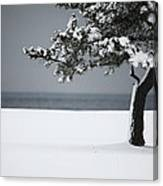 Winter Quiet Canvas Print