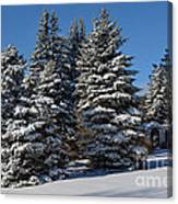 Winter Scenic Landscape Canvas Print