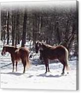 Winter Shadow Horses Canvas Print